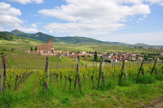 Vue sur Zellenberg et la plaine d'Alsace